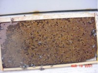 hive frame 200x149 The Anatomy Of A Honeybee Hive